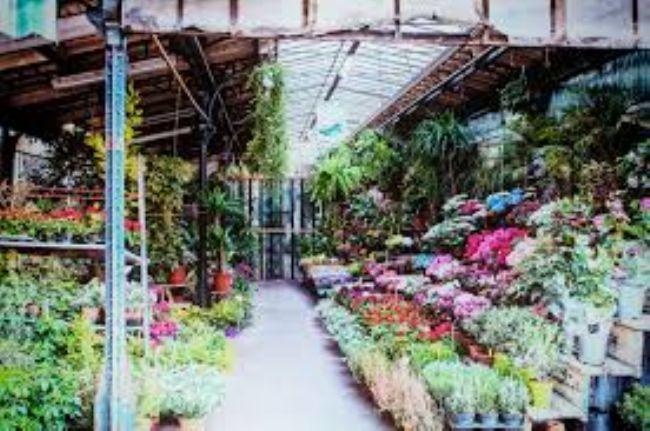 Estorsioni al mercato dei fiori, sette arresti nel Napoletano ...